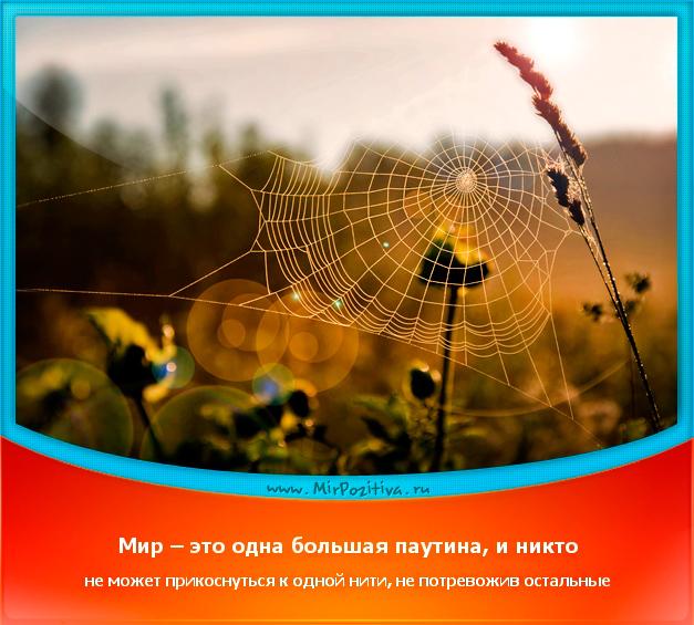 позитивчик дня: Мир – это одна большая паутина, и никто не может прикоснуться к одной нити, не потревожив остальные