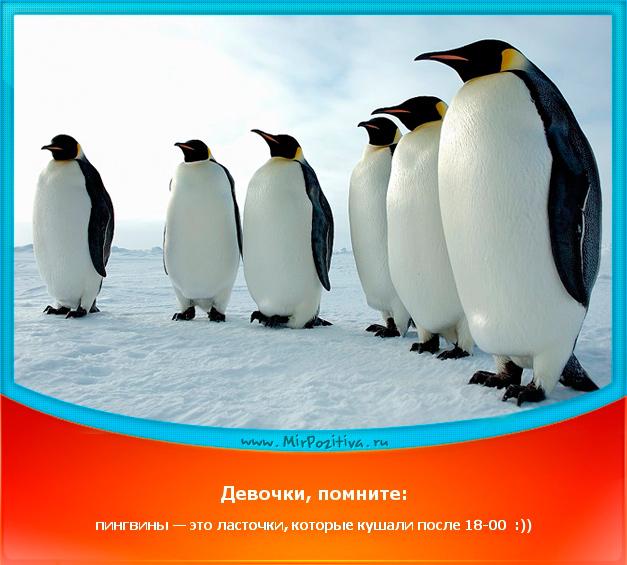 позитивчик дня: Девочки, помните: пингвины — это ласточки, которые кушали после 18-00 :))