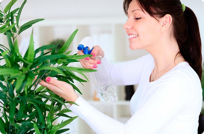женщина ухаживает за домашними растениями