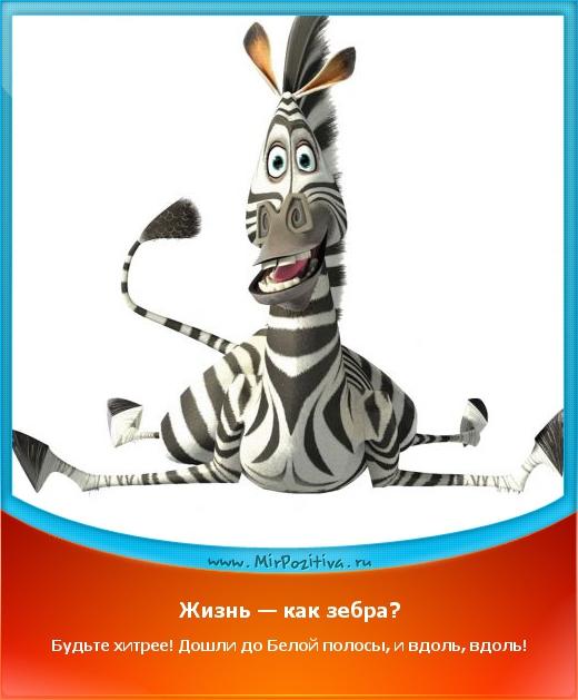 Жизнь — как зебра! Будь хитрее! Дошел до белой полосы и вдоль, вдоль!