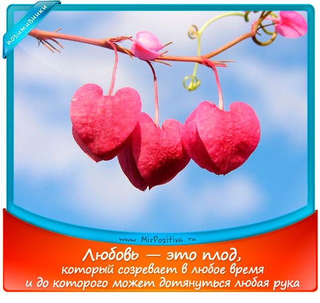 позитивчик лета: Любовь — это плод, который созревает в любое время и до которого может дотянуться любая рука