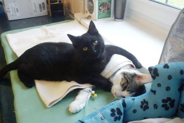 Кот-медбрат лечит своих собратьев