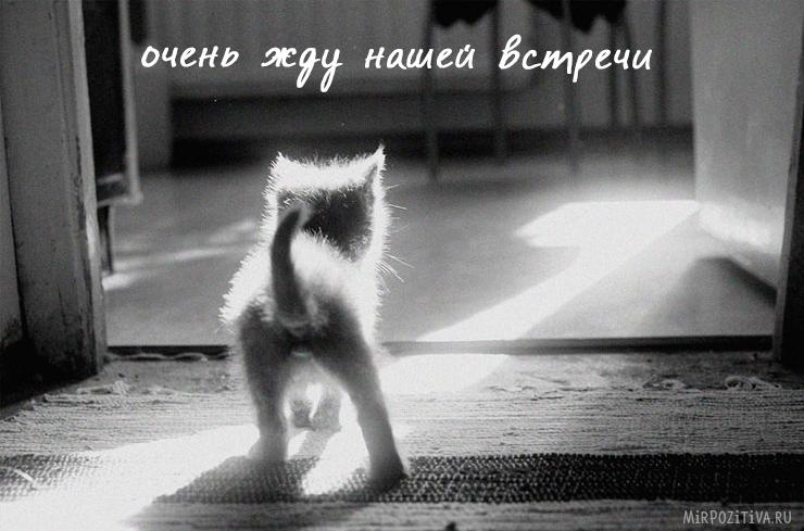 котенок: очень жду нашей встречи