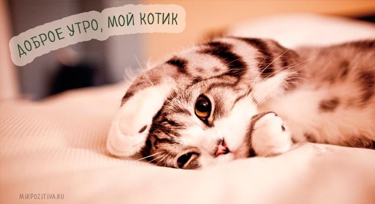 Доброе утро, мой котик
