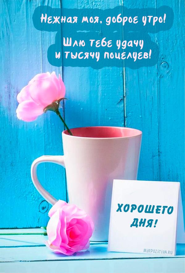 Нежная моя, доброе утро! Шлю тебе удачу и тысячу поцелуев!