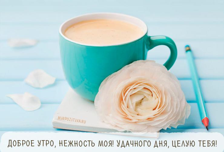 чашка кофе и цветок! Удачного дня, целую тебя!