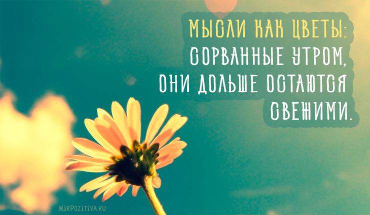 Мысли как цветы: