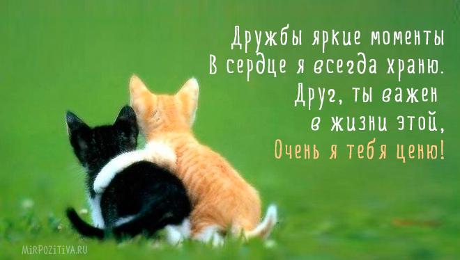 два кота обнимаются
