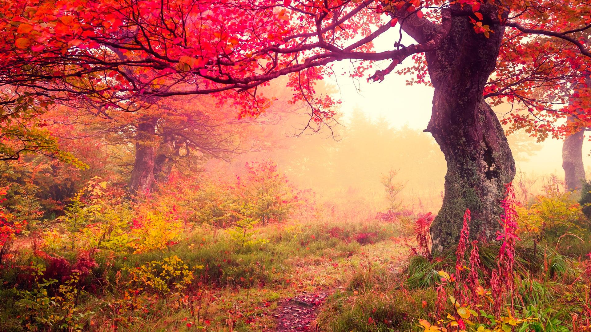 опадают листья с дерева