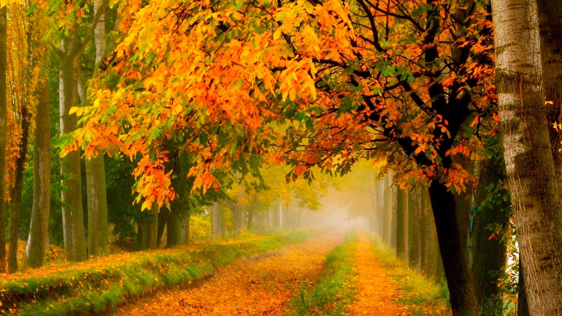 лесная дорога в сентябре