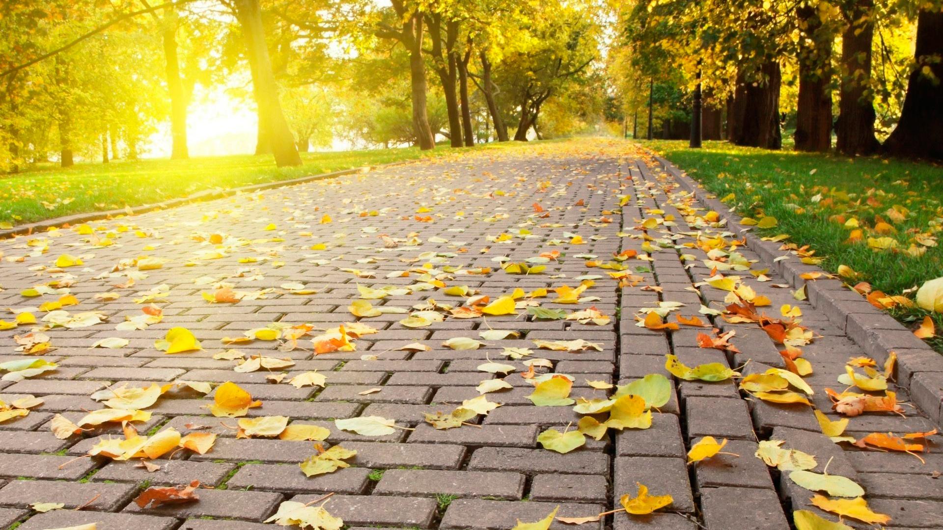тротуар листья