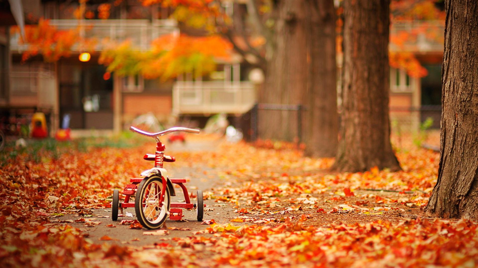 детский велосипед в листве