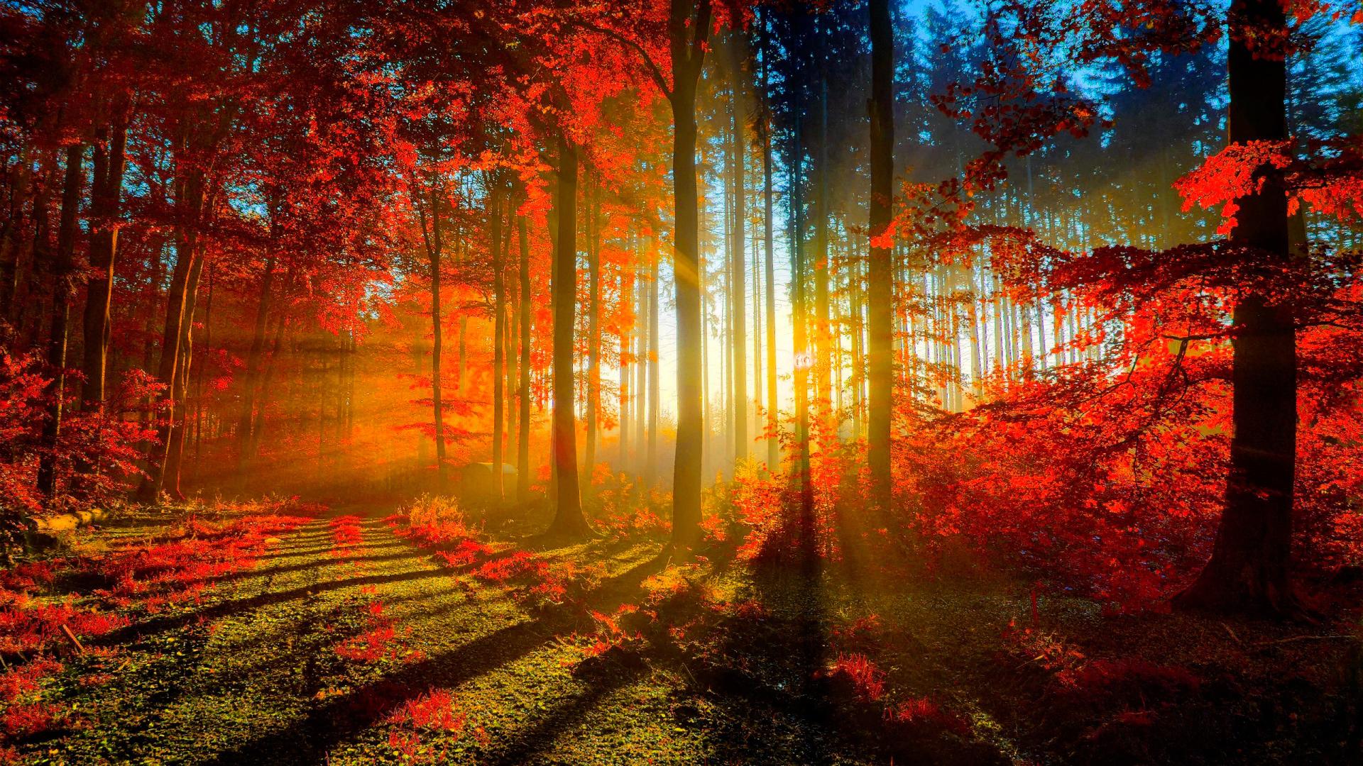 красивый лес осенью