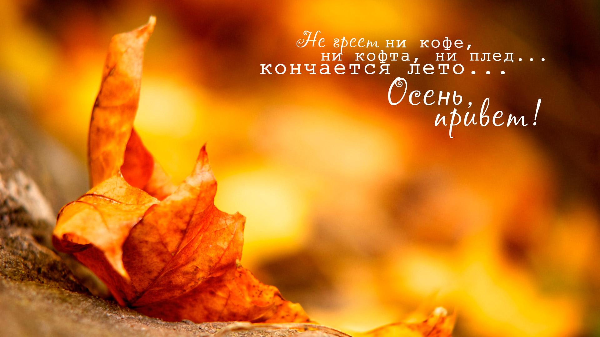 Не греет ни кофе, ни кофта, ни плед... кончается лето... Осень, привет!