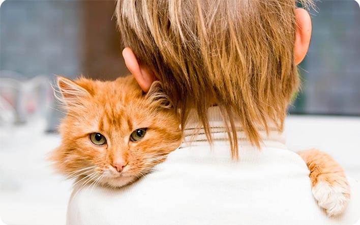 рыжий кот на плече у ребенка