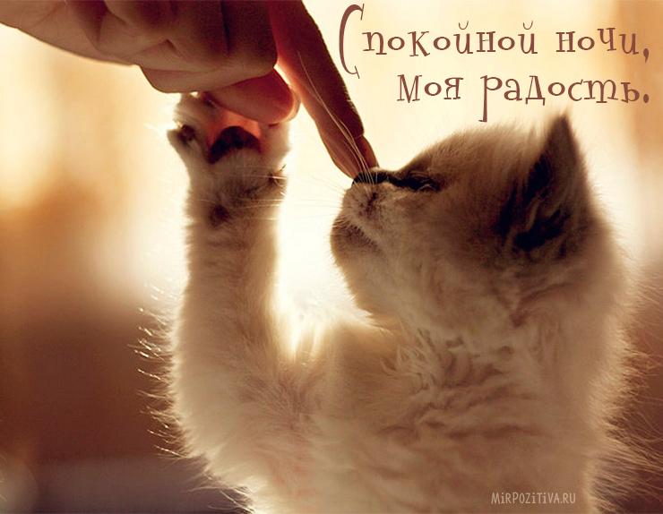 трогать нос котенку