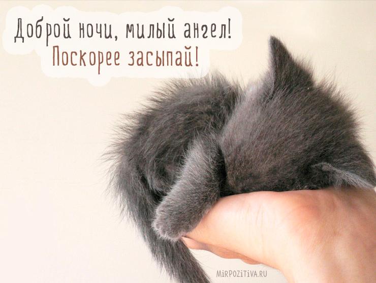 Доброй ночи, милый ангел! Поскорее засыпай!