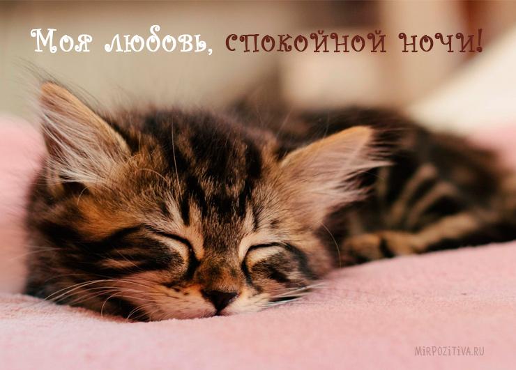 Моя любовь, спокойной ночи!