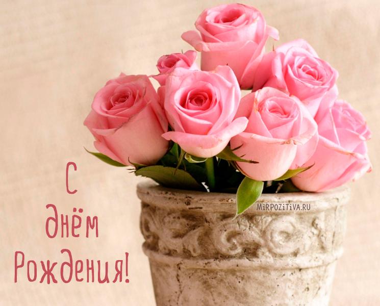 красивые нежные розы