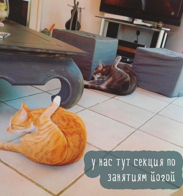 два кота подняли ногу