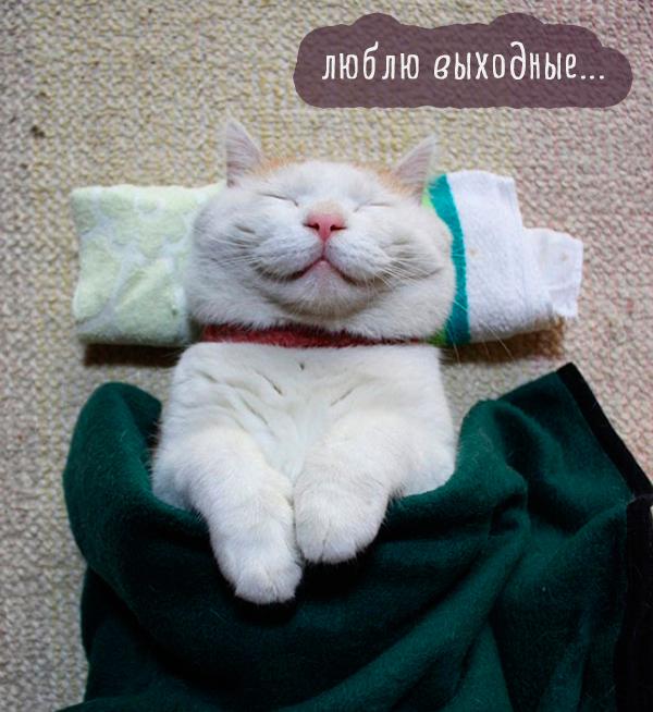белая кошка под одеялом спит