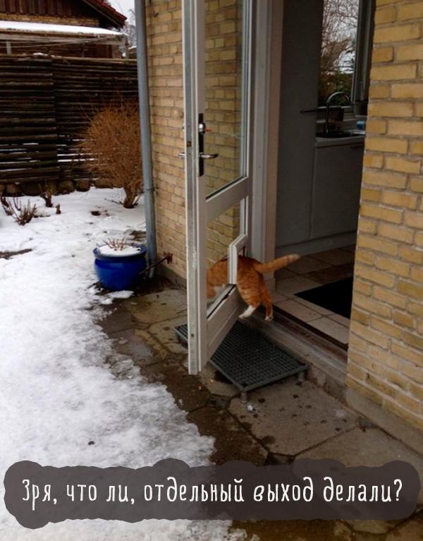 кошка застряла в двери