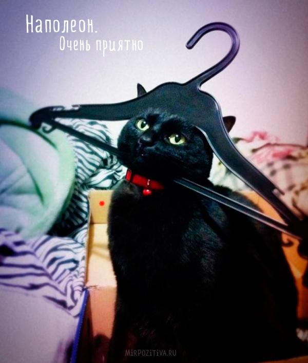 кот наполеон с вешалкой на голове