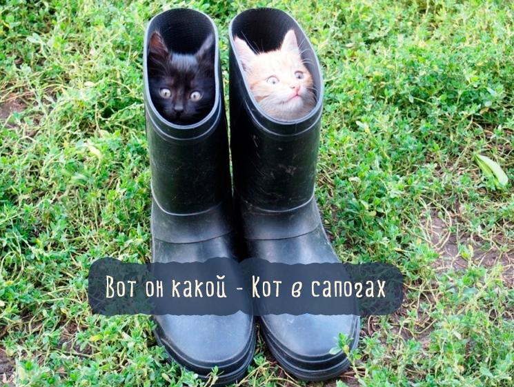 котята в сапогах
