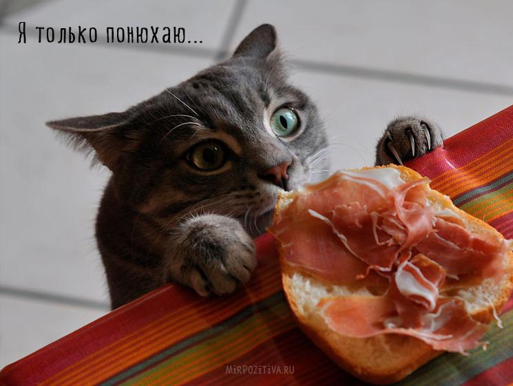 кошка ворует колбасу