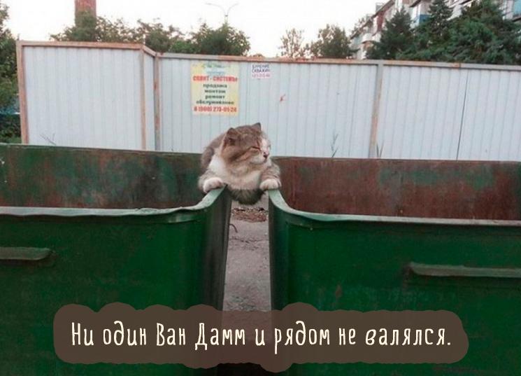 кошка на мусорных баках