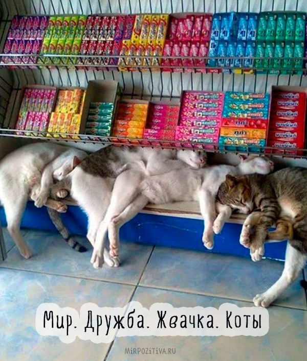 коты спят на прилавке с жвачками