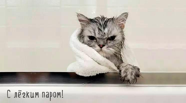 кошка в полотенце после душа