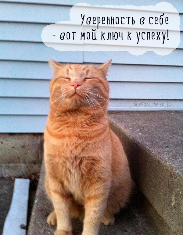 самоуверенный рыжий кот