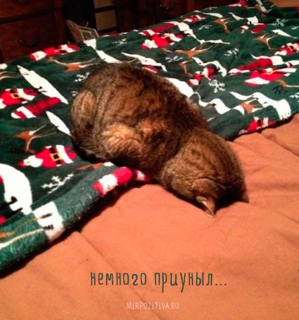 кот устал