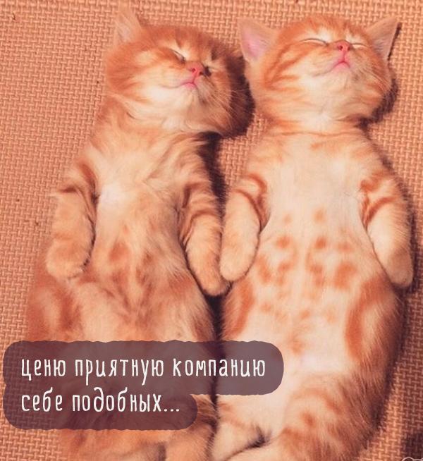 два рыжих кота спят