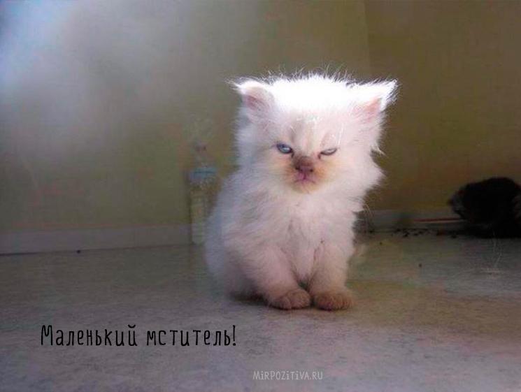 котенок не выспался