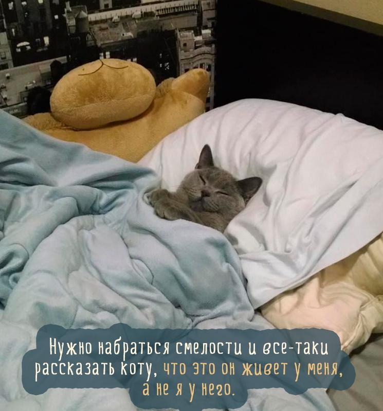 серый ко спит на кровати под одеялом