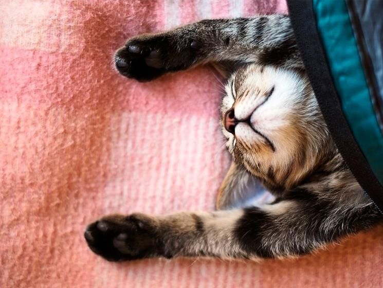 кот спит лапами вверх
