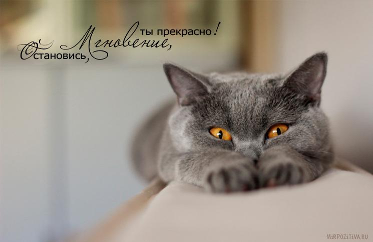 серая кошка лежит
