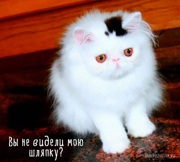кошка со шляпой на голове
