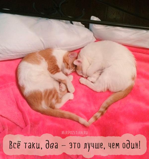 две кошки хвост сердце