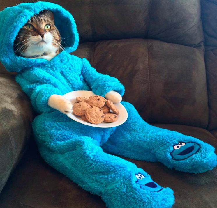 кот на диване в одежде с печеньками