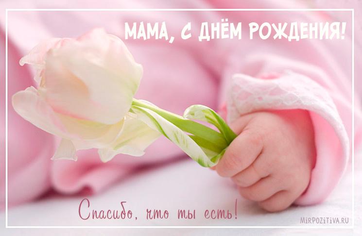 рука младенца держит цветок