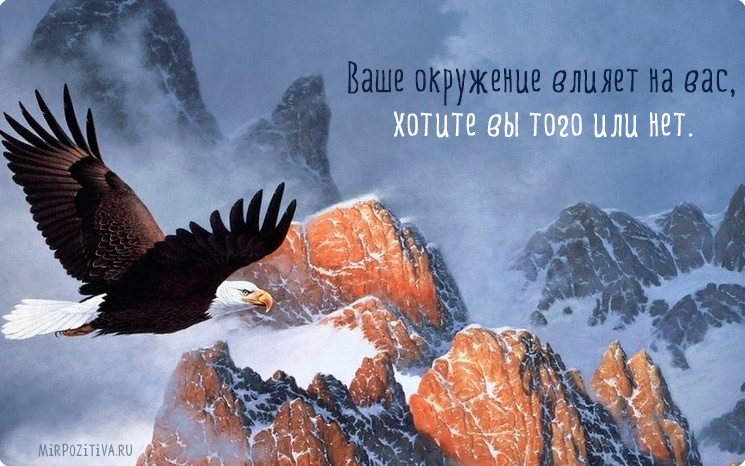 орел летит