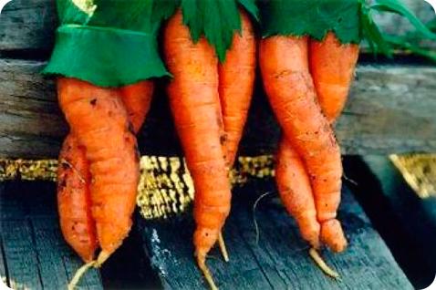 морковь смешная