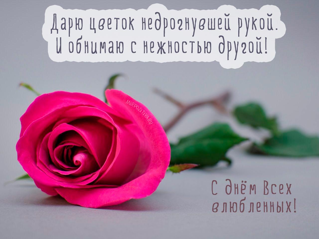 Дарю цветок недрогнувшей рукой. И обнимаю с нежностью другой!