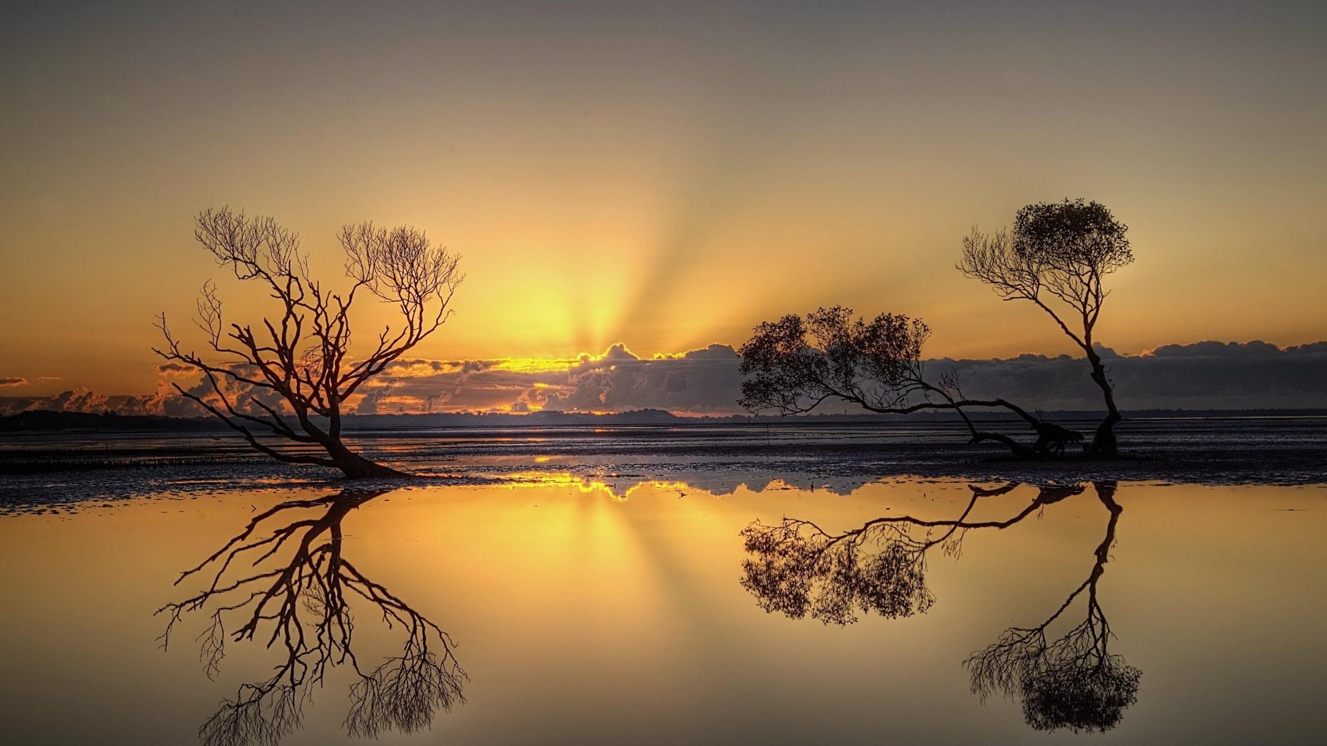 деревья вода отражение на закате