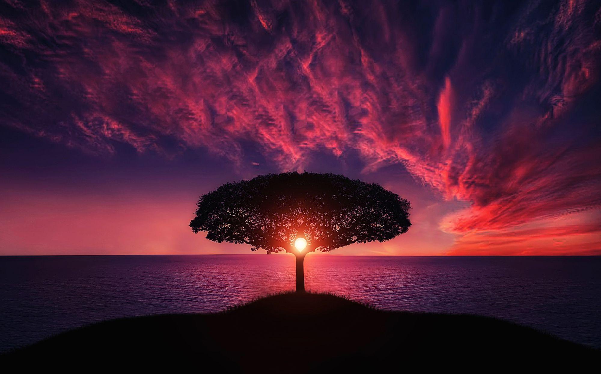 закат дерево