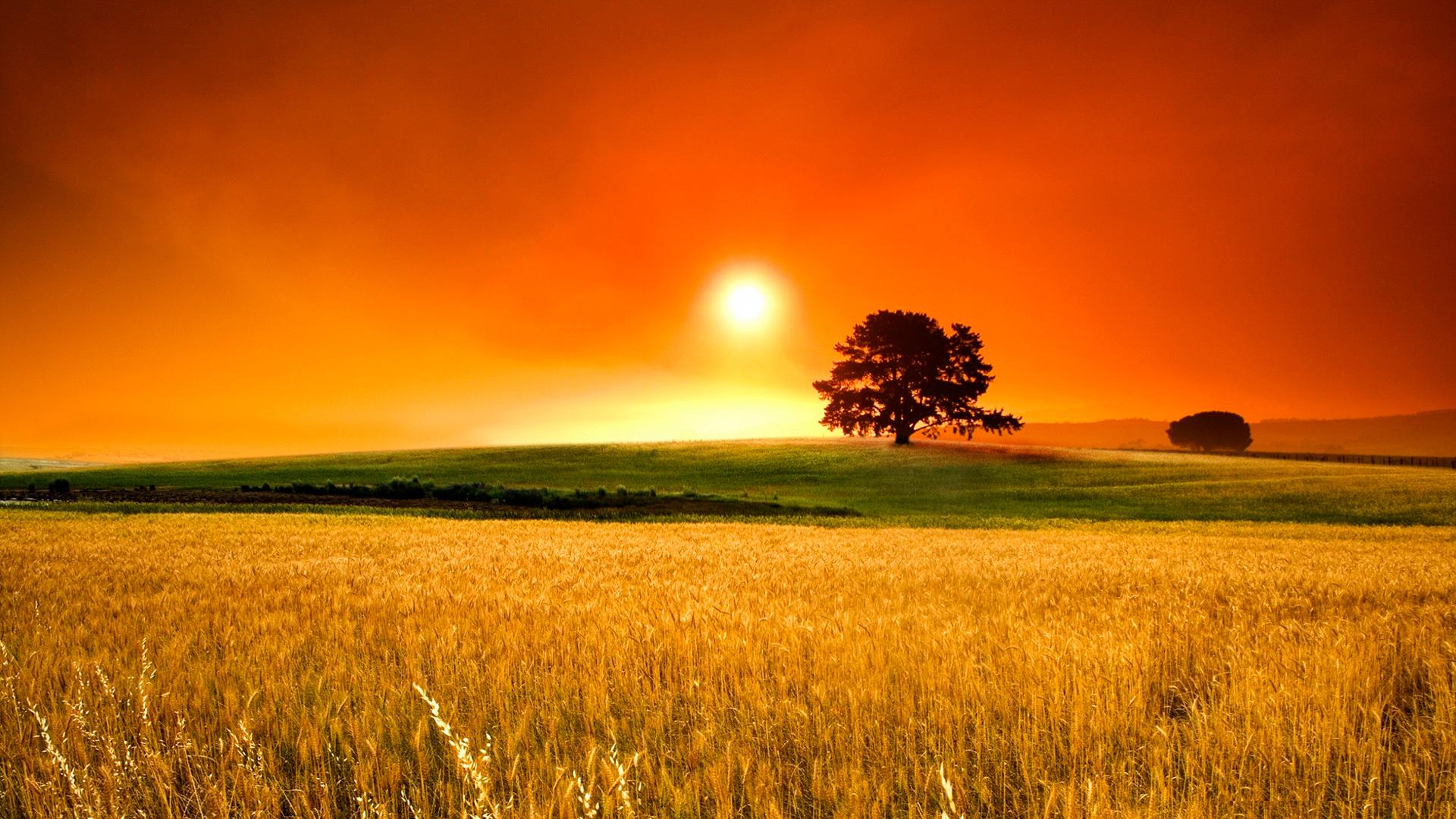закат поле