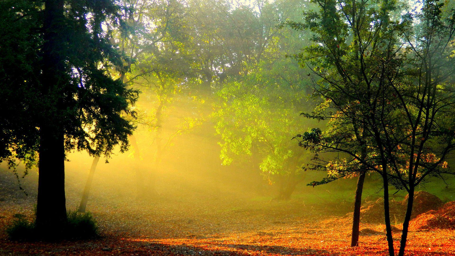 лес деревья солнечные лучи